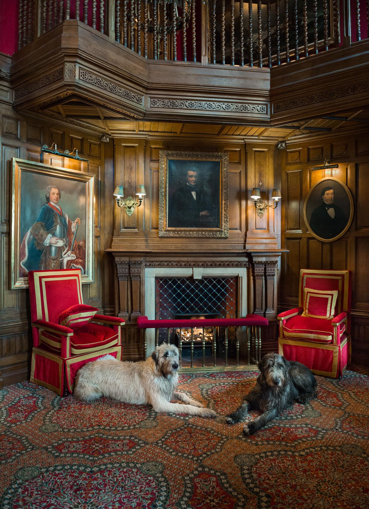 O18-565 Irish Wolf hounds at Ashford Castle, Ireland